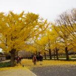 昭和記念公園ではじける。