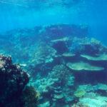 201709 オーストラリア旅行6 Great Barrier Reefでスノーケリング&ダイビング