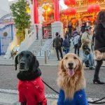 大型犬と横浜中華街〜翡翠本店