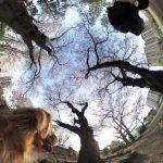 360度全天球カメラ RICOH THETA SC