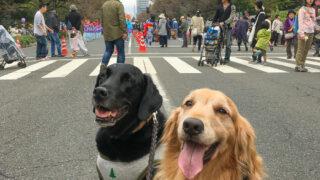 2018国立市天下市&市民祭り