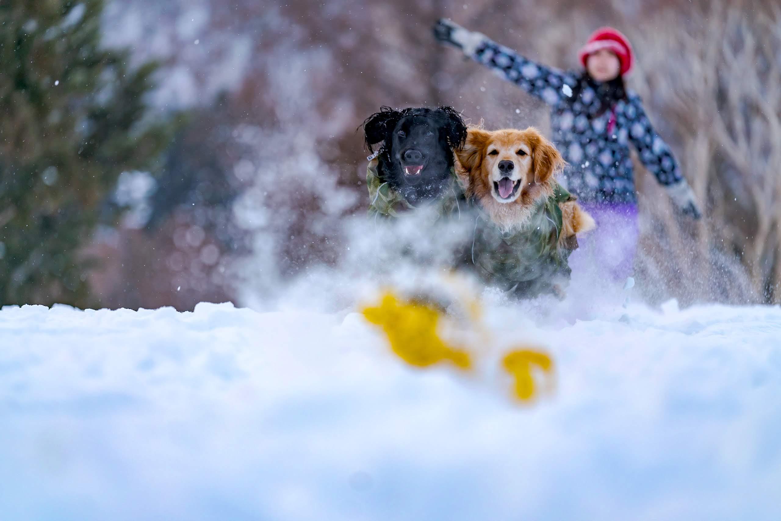 202001野沢温泉とヤマボクでスキー&雪遊び その1 前回のおさらいとレンタルキャンピングカー