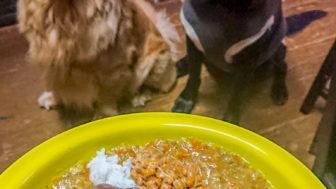 手作りわんこご飯とプレミアムフードコスト比較